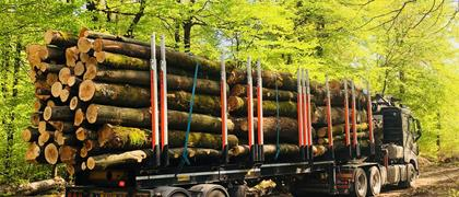 Discover our transport solutions for the forestry sector